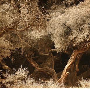 Ladakh: Magical Orchard by Anirban Dutta Gupta, Image Photograph, Digital Print on Enhanced Matt, Brown color