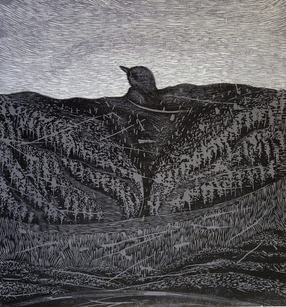 Lost Feather by Soghra Khurasani, Illustration Printmaking, Wood Cut on Paper, Gray color