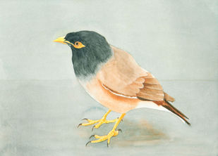 Myna by Raju Patel, Impressionism Painting, Watercolor on Paper, Beige color