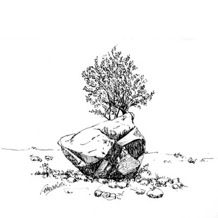 Stone at Cubbon Park by Badal Majumdar, Illustration Drawing, Pen & Ink on Paper, White color