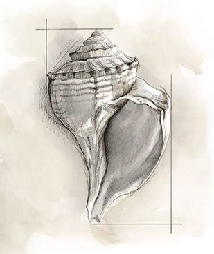 Shell Schematic I Digital Print by Meagher, Megan,Decorative