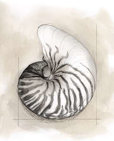 Shell Schematic II Digital Print by Meagher, Megan,Decorative
