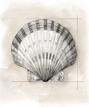 Shell Schematic III Digital Print by Meagher, Megan,Decorative