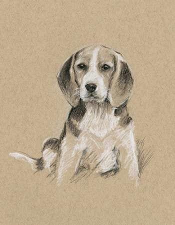 Breed Sketches I Digital Print by Harper, Ethan,Illustration