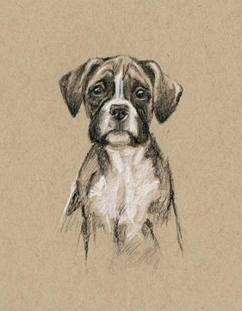 Breed Sketches V Digital Print by Harper, Ethan,Realism