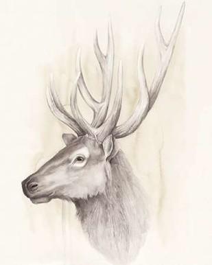 American Wilderness III Digital Print by Popp, Grace,Illustration