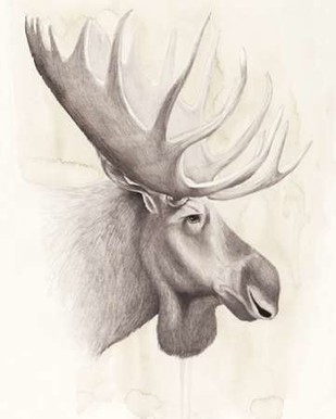 American Wilderness IV Digital Print by Popp, Grace,Illustration