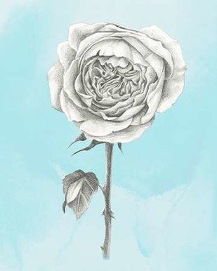 Graphite Rose I Digital Print by Popp, Grace,Illustration