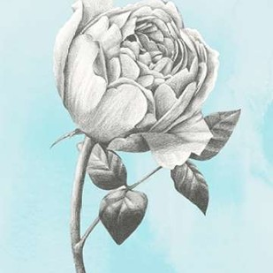 Graphite Rose II Digital Print by Popp, Grace,Illustration
