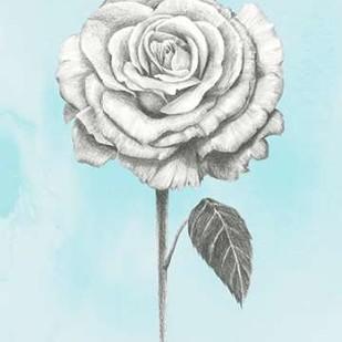 Graphite Rose III Digital Print by Popp, Grace,Illustration