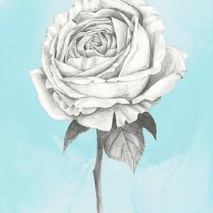 Graphite Rose IV Digital Print by Popp, Grace,Illustration