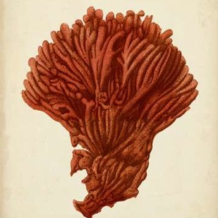 Antique Red Coral I Digital Print by Vision Studio,Realism