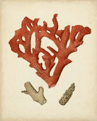 Antique Red Coral II Digital Print by Vision Studio,Realism