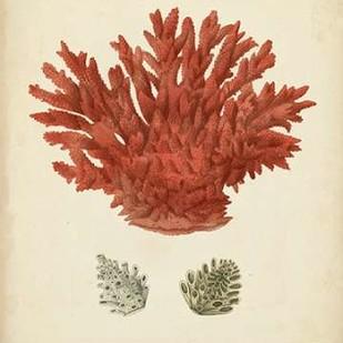 Antique Red Coral III Digital Print by Vision Studio,Realism