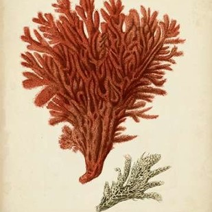 Antique Red Coral V Digital Print by Vision Studio,Realism