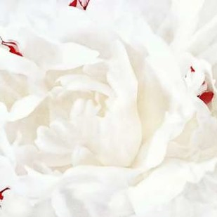 White Linen Peony I Digital Print by Perry, Rachel,Abstract