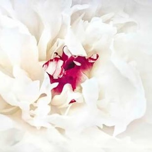 White Linen Peony II Digital Print by Perry, Rachel,Abstract