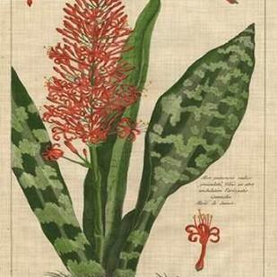 Botanical Study on Linen I Digital Print by Vision Studio,Decorative