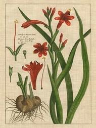 Botanical Study on Linen II Digital Print by Vision Studio,Decorative