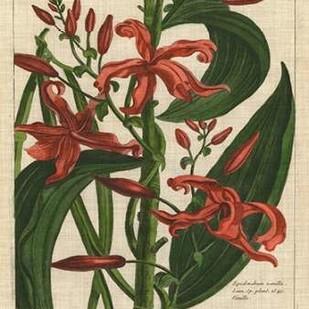 Botanical Study on Linen III Digital Print by Vision Studio,Decorative