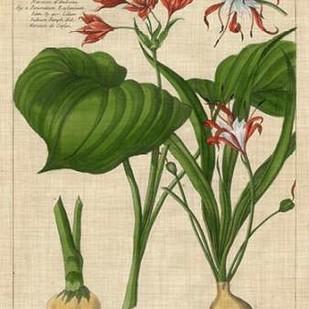 Botanical Study on Linen V Digital Print by Vision Studio,Decorative
