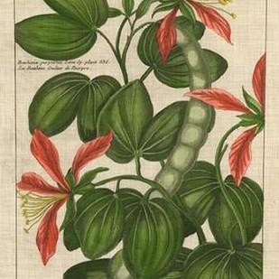 Botanical Study on Linen VI Digital Print by Vision Studio,Decorative