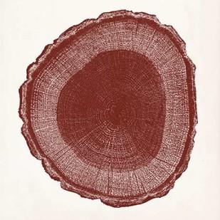 Tree Ring I Digital Print by Vision Studio,Decorative