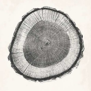 Tree Ring II Digital Print by Vision Studio,Decorative