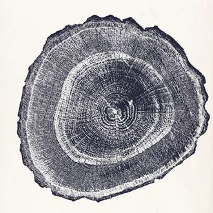 Tree Ring III Digital Print by Vision Studio,Decorative