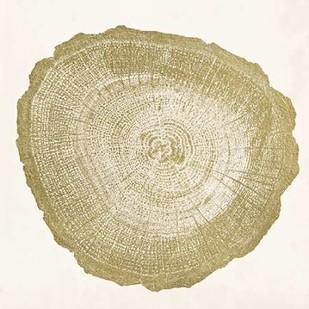 Tree Ring IV Digital Print by Vision Studio,Decorative