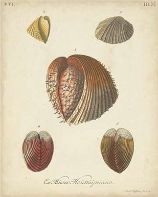 Antique Knorr Shells II Digital Print by Knorr,Realism