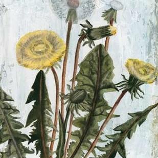 Dandelion Patina II Digital Print by McCavitt, Naomi,Realism
