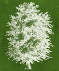 Modern Arbor I Digital Print by Vision Studio,Decorative