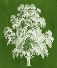 Modern Arbor II Digital Print by Vision Studio,Decorative