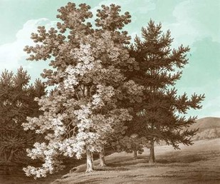 Serene Trees I Digital Print by Kennion, Edward,Realism