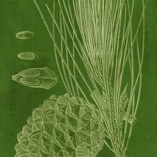 Modern Pine I Digital Print by Vision Studio,Decorative