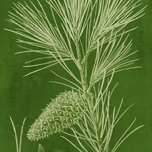 Modern Pine V Digital Print by Vision Studio,Decorative