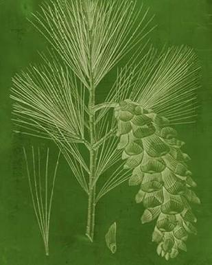 Modern Pine VI Digital Print by Vision Studio,Decorative