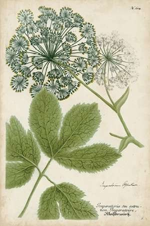 Queen Anne's Lace Digital Print by Weinmann,Decorative