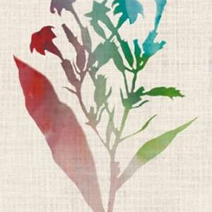 Watercolor Plants II Digital Print by McCavitt, Naomi,Decorative
