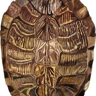 Tortoise Shell Detail I Digital Print by McCavitt, Naomi,Realism