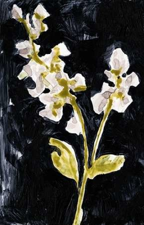 Midnight Phlox I Digital Print by Goldberger, Jennifer,Impressionism