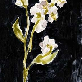 Midnight Phlox II Digital Print by Goldberger, Jennifer,Impressionism