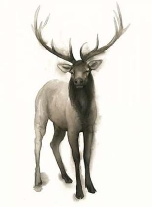 Majestic Wildlife II Digital Print by Popp, Grace,Realism