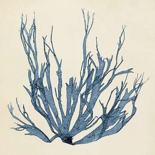 Coastal Seaweed I Digital Print by Vision Studio,Decorative