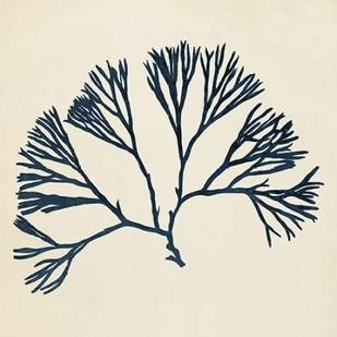 Coastal Seaweed VI Digital Print by Vision Studio,Decorative