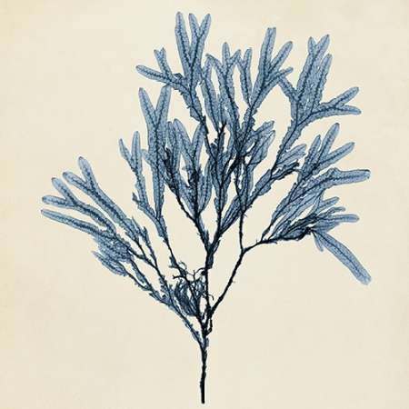 Coastal Seaweed VIII Digital Print by Vision Studio,Decorative