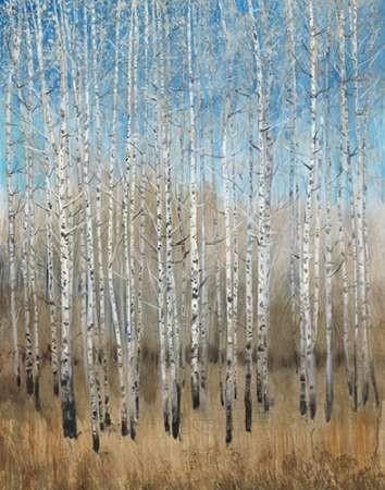 Dusty Blue Birches II Digital Print by OToole, Tim,Impressionism