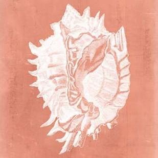 Sealife on Coral VI Digital Print by Vision Studio,Decorative