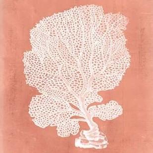 Sealife on Coral VIII Digital Print by Vision Studio,Decorative